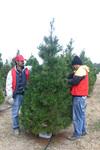 Treefarm4