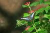 Twobutterflies_800