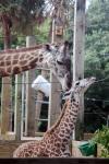 Zoo_img_0248