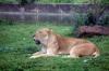 Zoo_img_0288