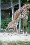 Zoo_img_9755